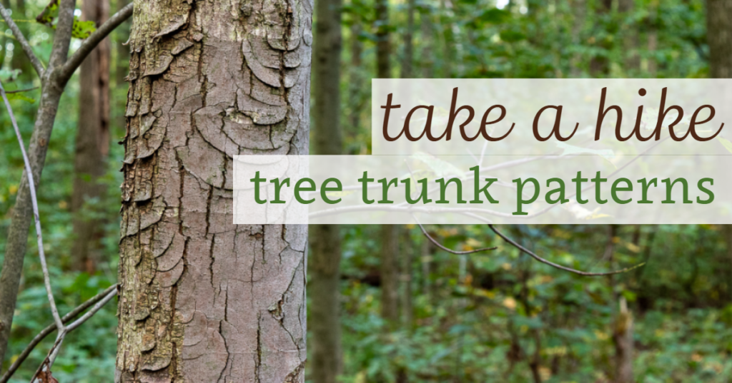 Take a Hike: Tree Trunk Patterns