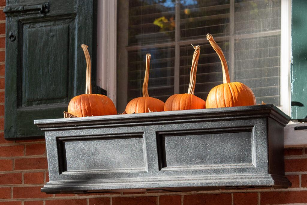 Pumpkins in window boxes