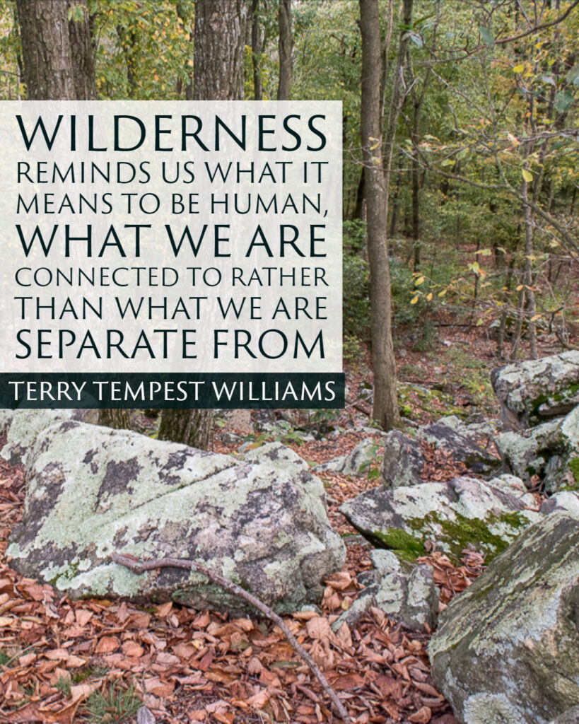 Wilderness reminds us what it means to be human, what we are connected to rather than what we are separate from. ~Terry Tempest Williams