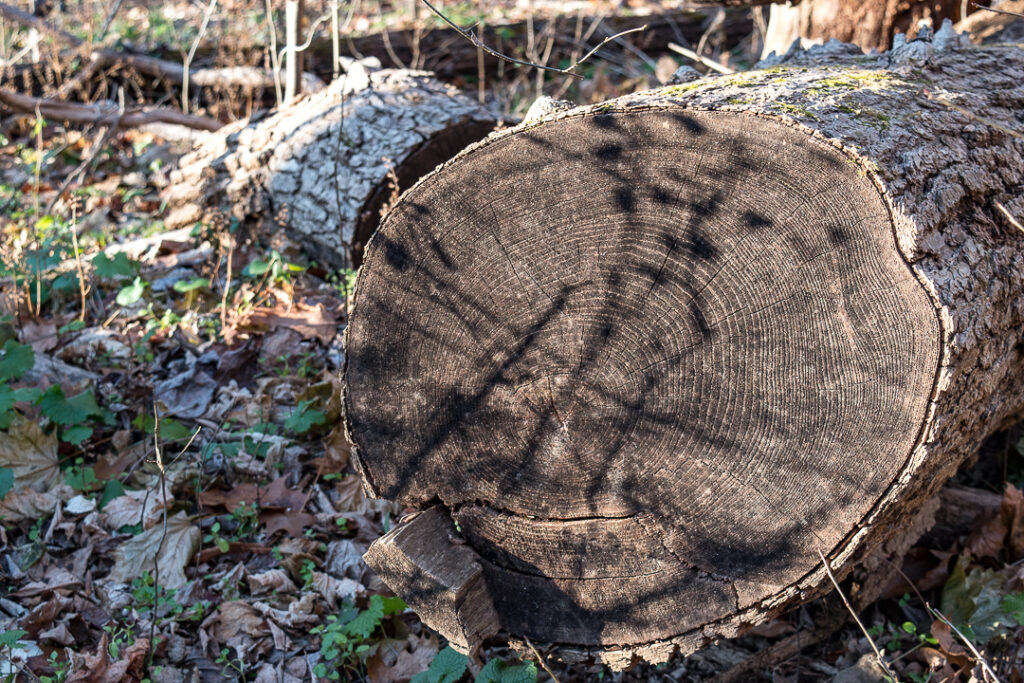 Shadows on tree trunk