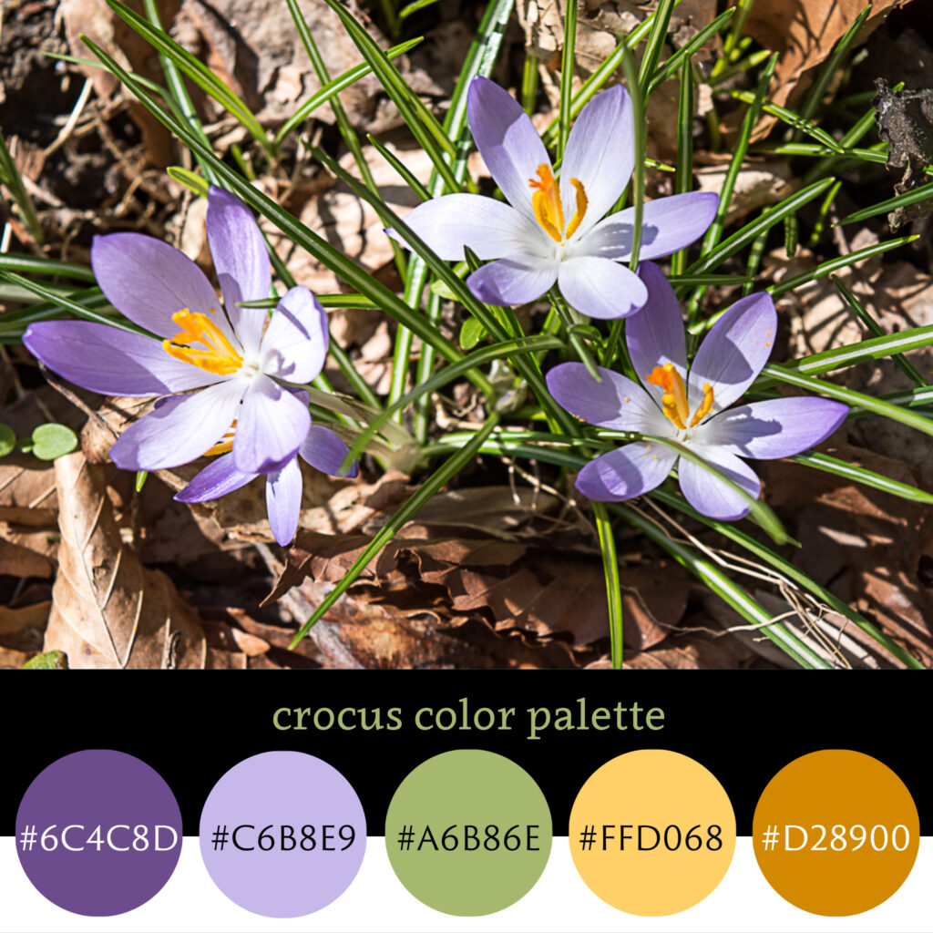 Crocus Color Palette