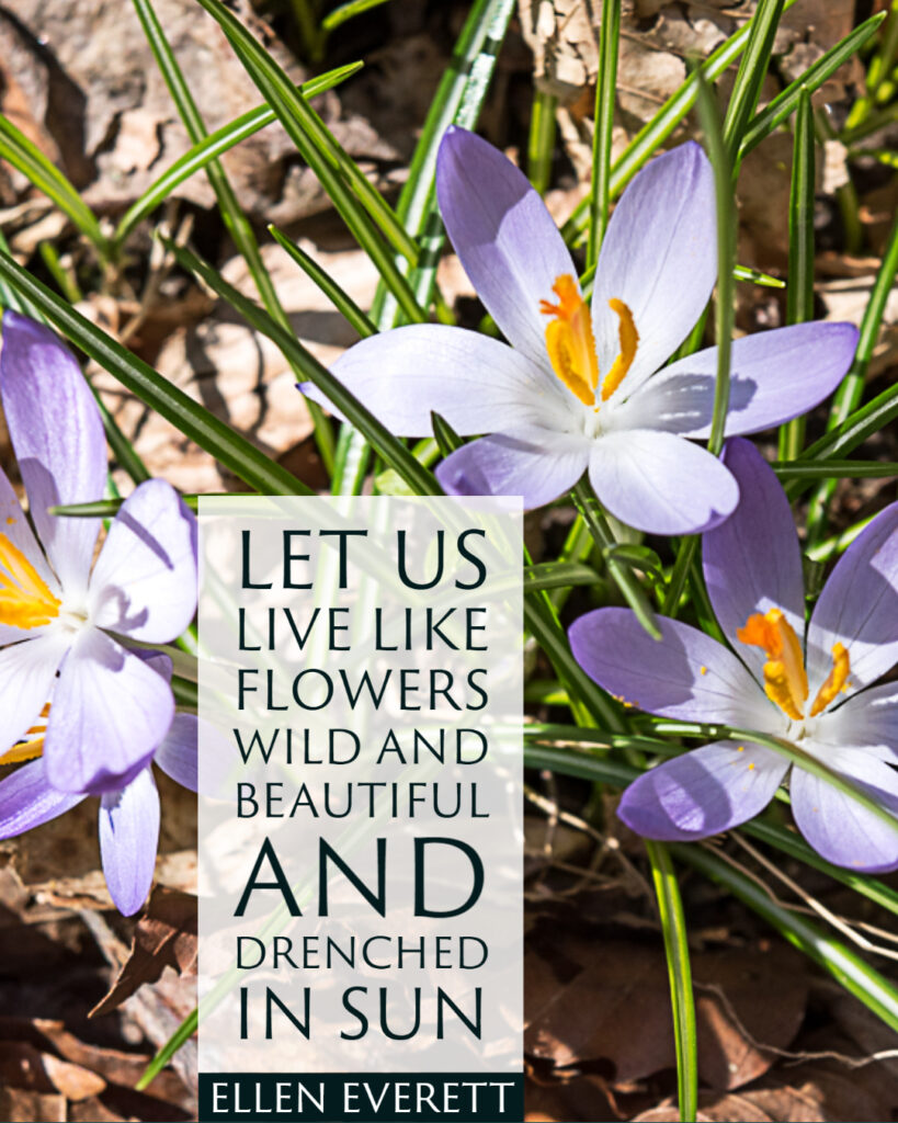 """""""Let us live like flowers, wild and beautiful and drenched in sun."""" ~Ellen Everett"""
