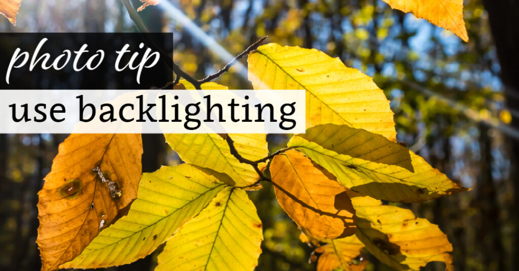 Photo Tip: Use Backlighting