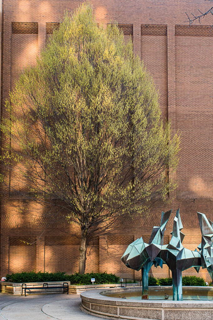 Patches of sunlight on brick building and tree.