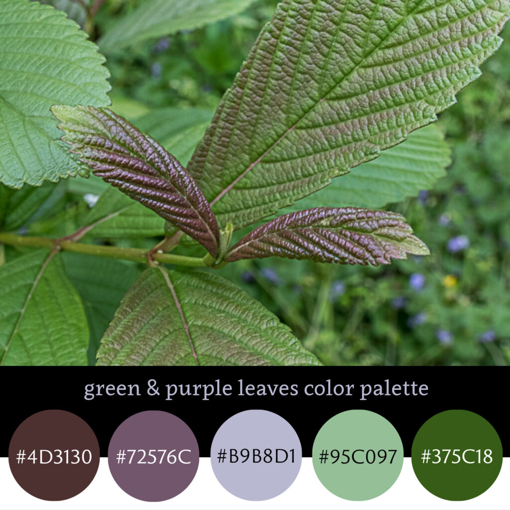Green & purple leaves color palette