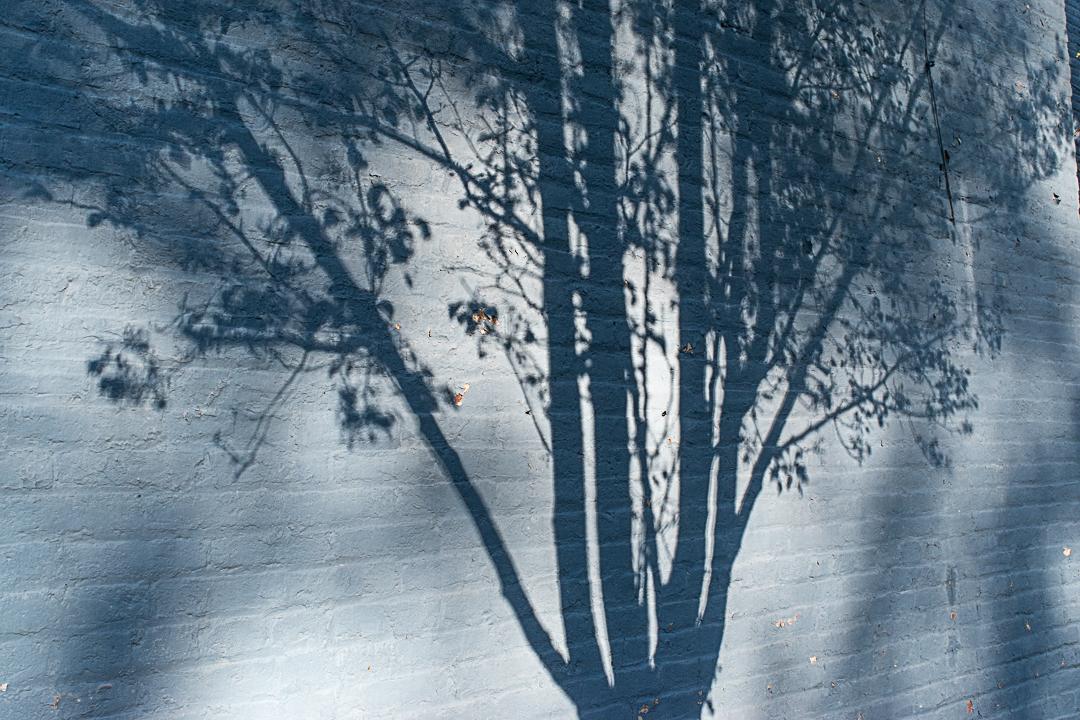 Tree shadow on a blue brick wall