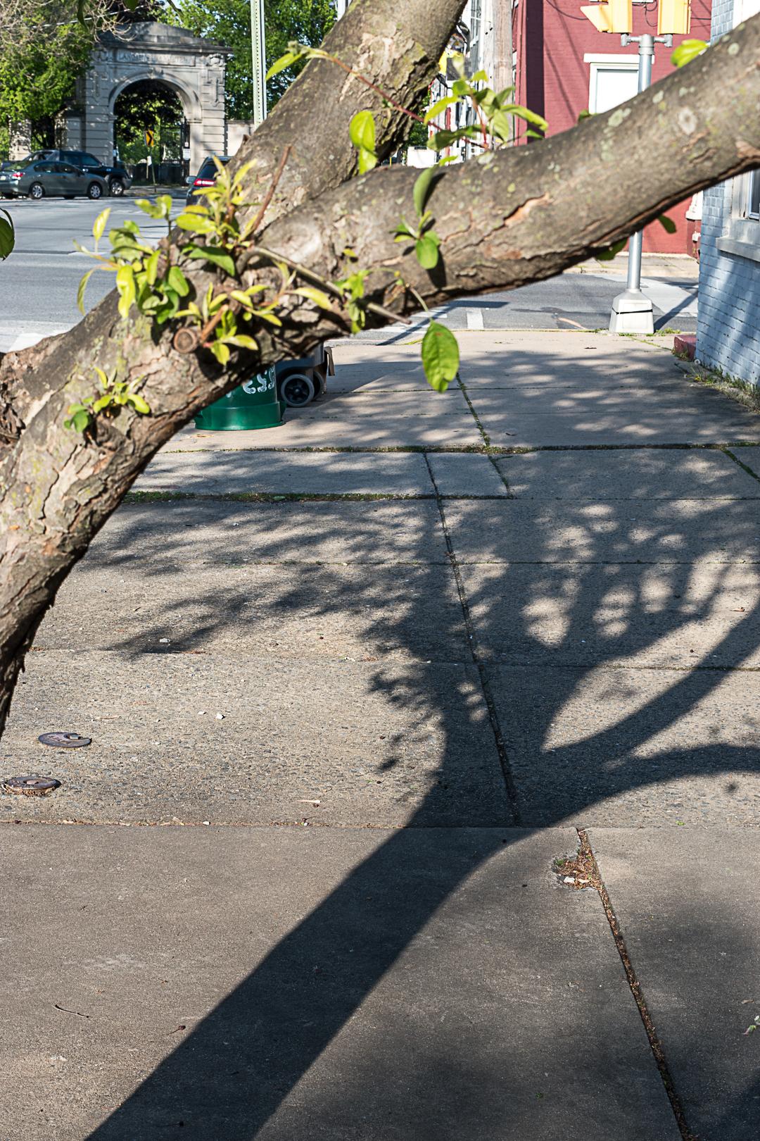 Tree shadow on the sidewalk
