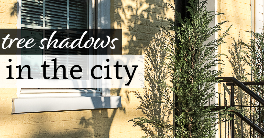 Tree Shadows in the City