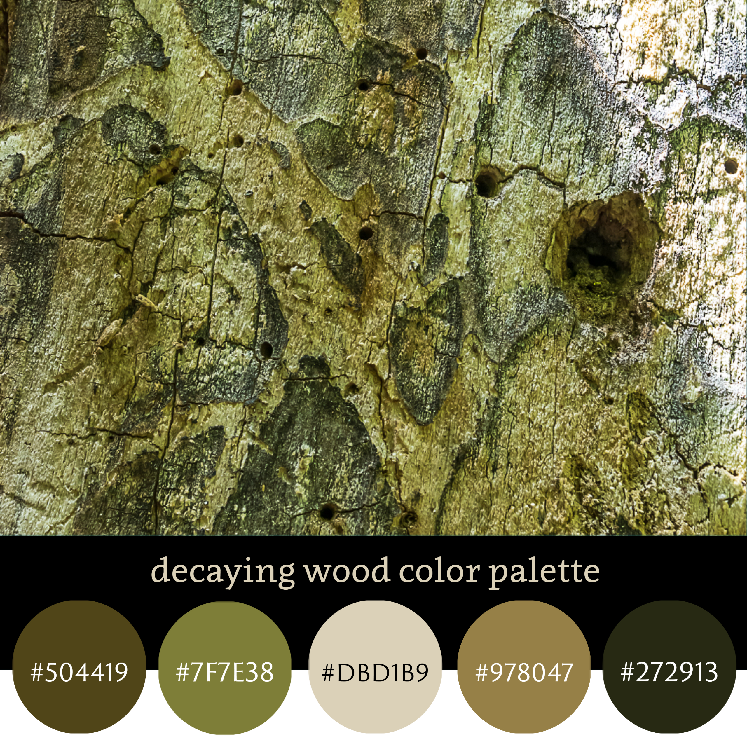 Decaying Wood Color Palette