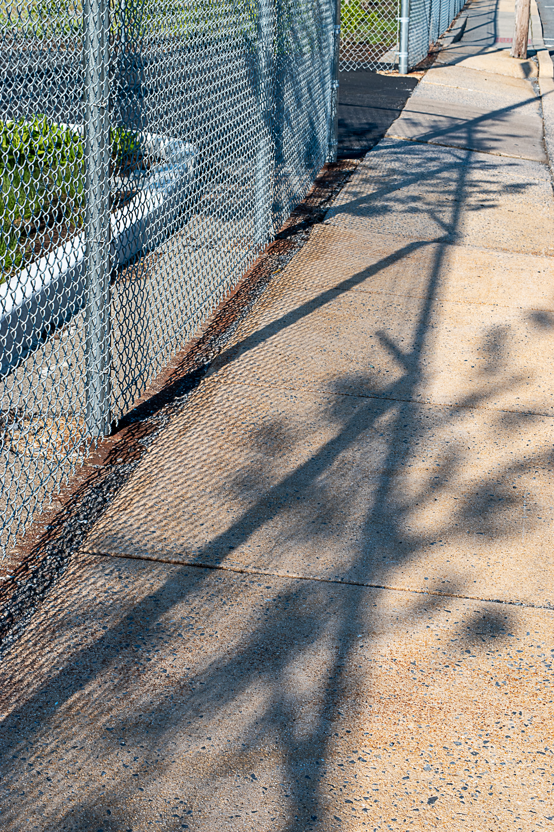 Fence & plant shadow on sidewalk