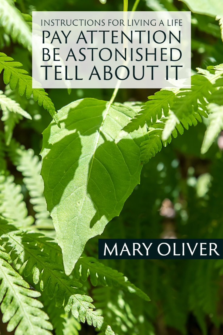 """Instructions for living a life. Pay attention. Be astonished. Tell about it."" ~Mary Oliver"