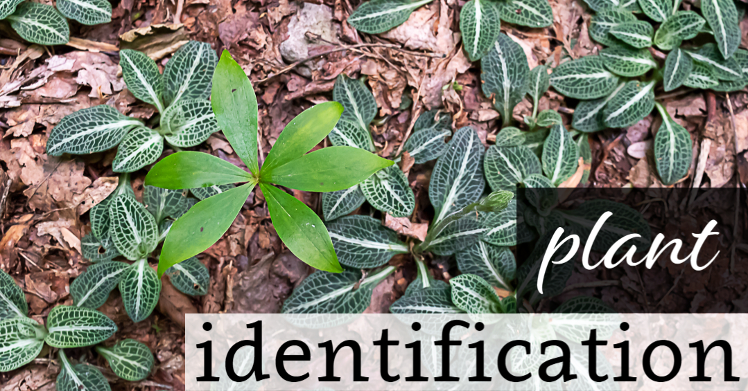 Identifying Plants with the Seek App