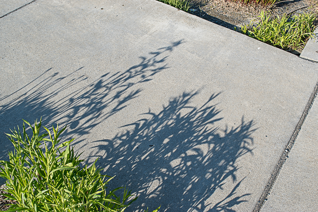 Plant shadow on sidewalk
