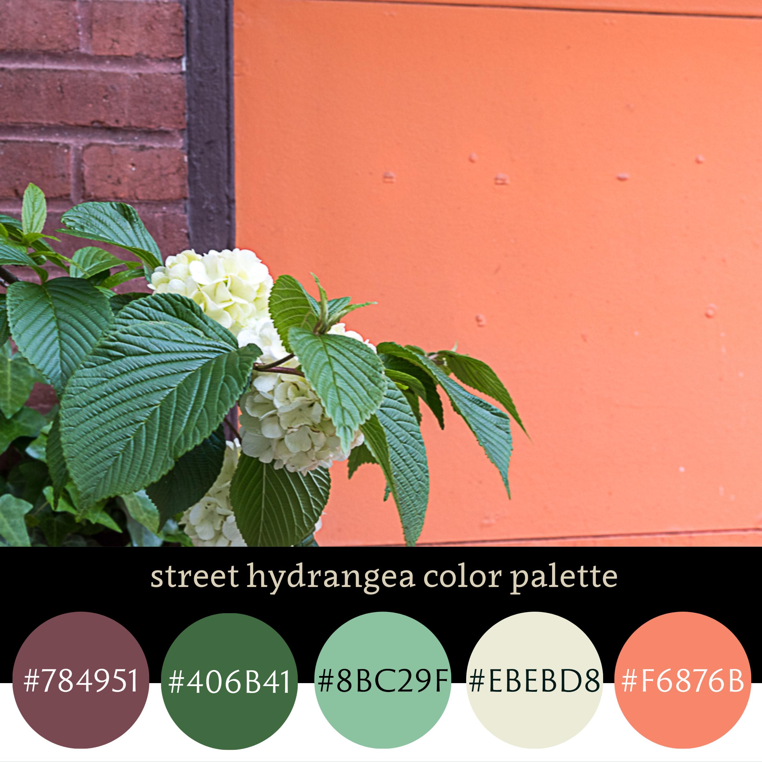Street Hydrangea Color Palette