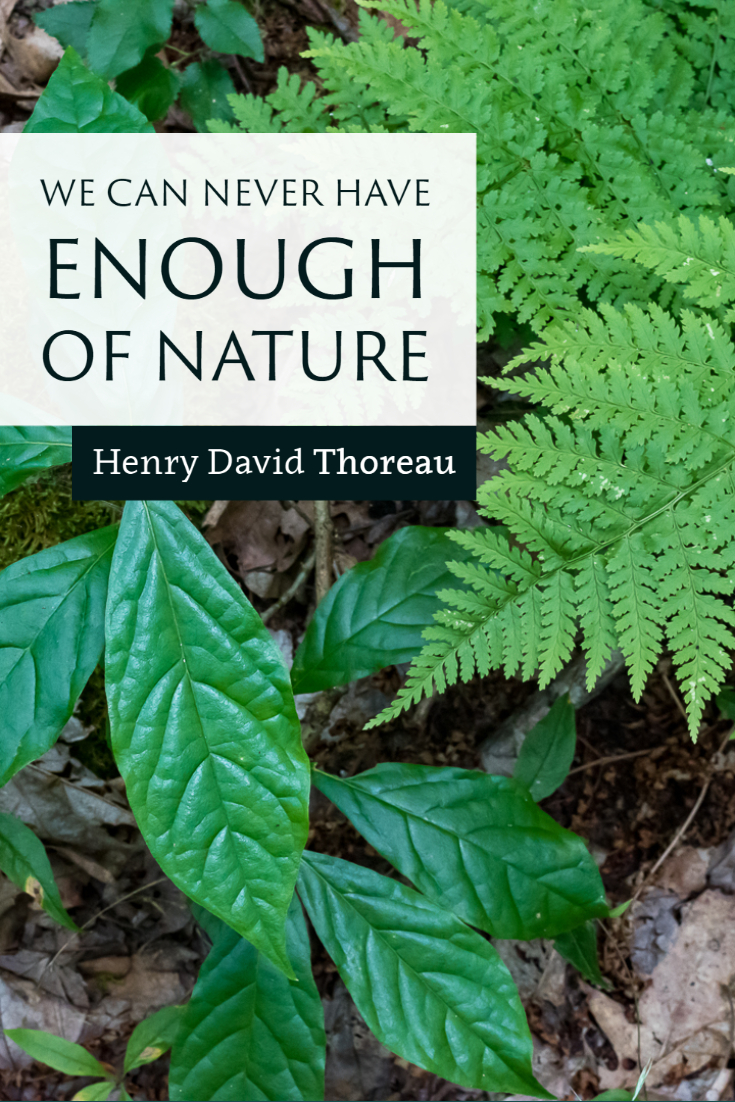 """We can never have enough of nature."" ~Henry David Thoreau"
