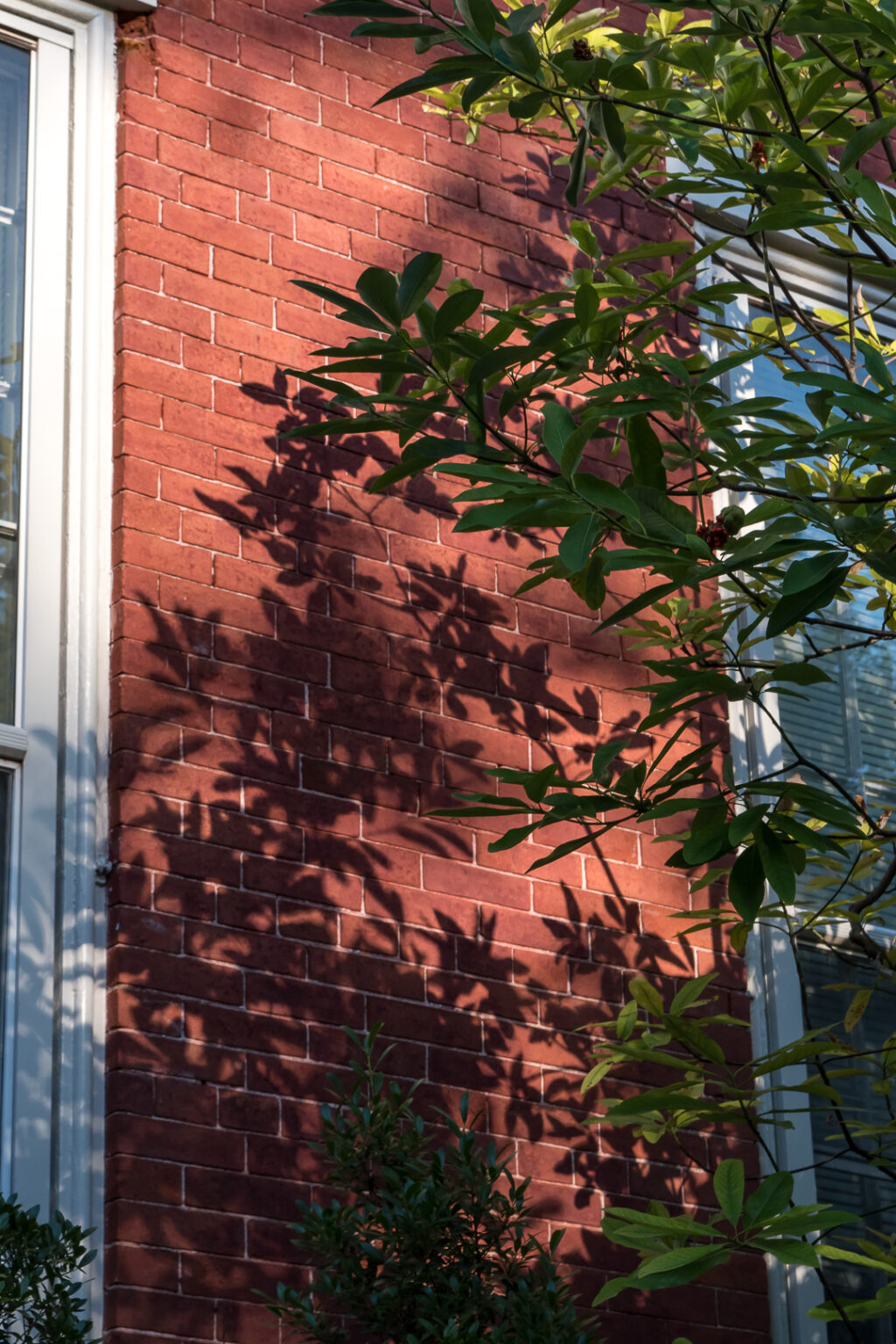 Plant shadows on a house