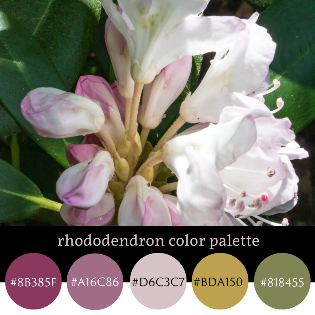 Rhodendron Color Palette