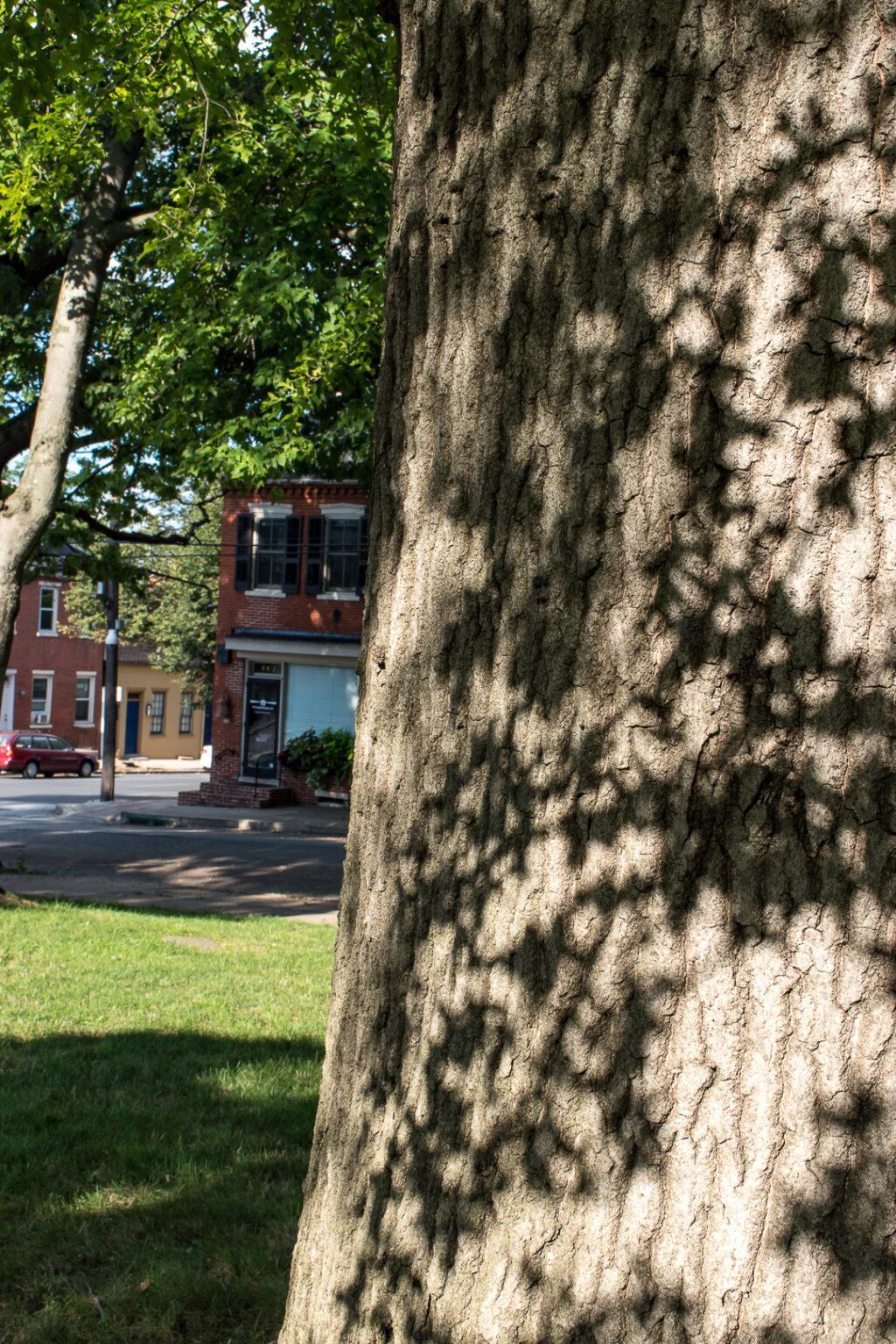 Plant shadows on a tree trunk