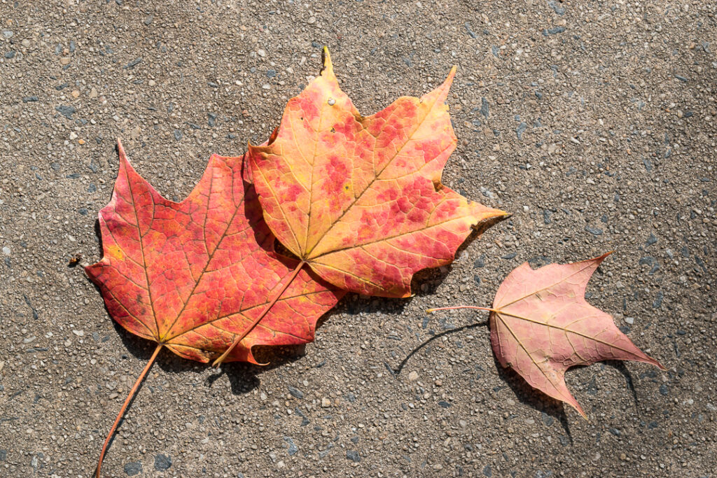 Autumn leaves on  a sidewalk