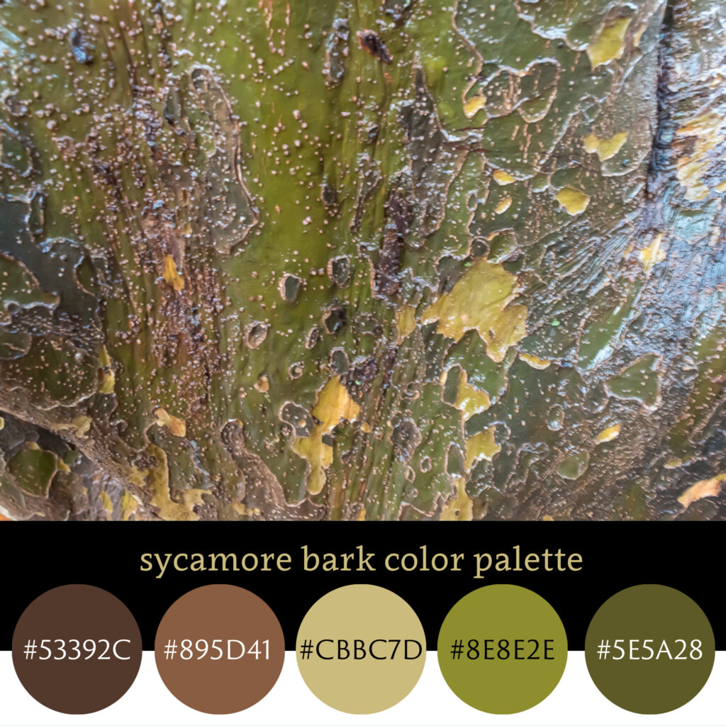 Sycamore Bark Color Palette