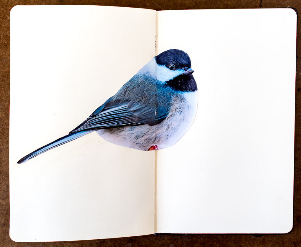Bird photo glued into journal