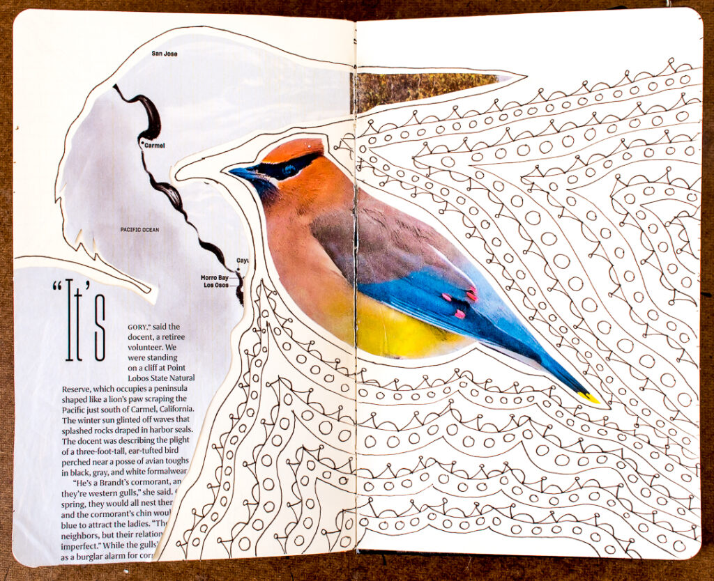 heron and cedar waxwing with doodles