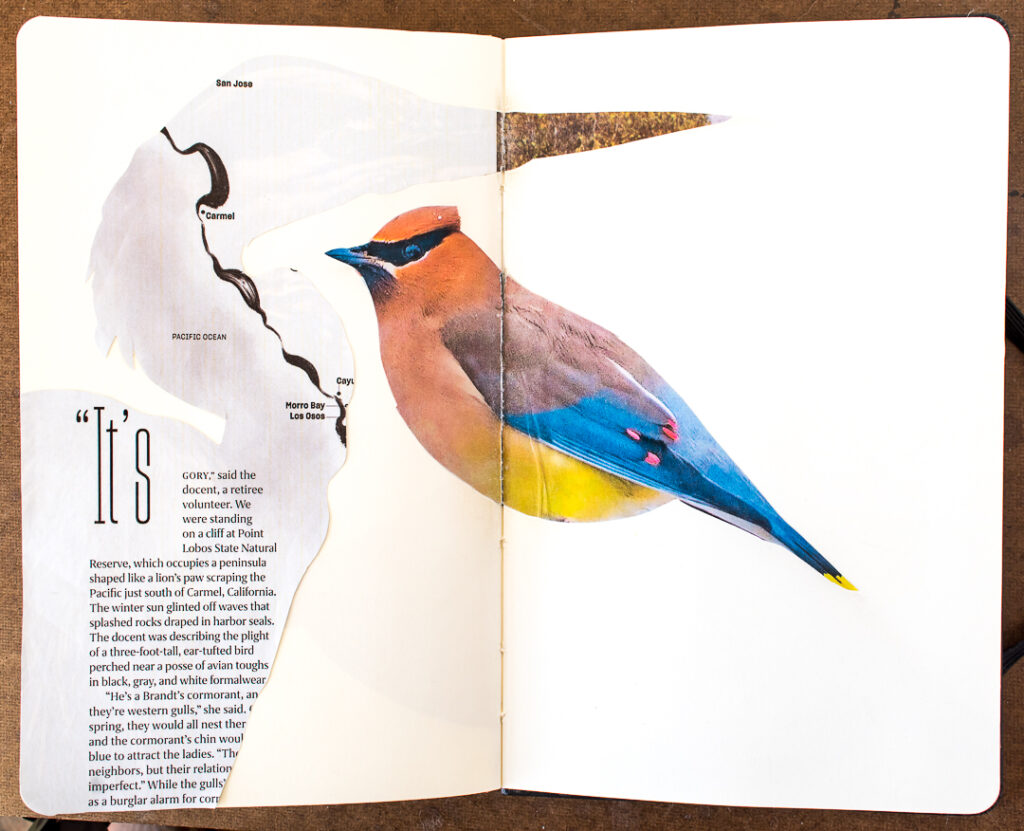 2 more bird photos glued into journal