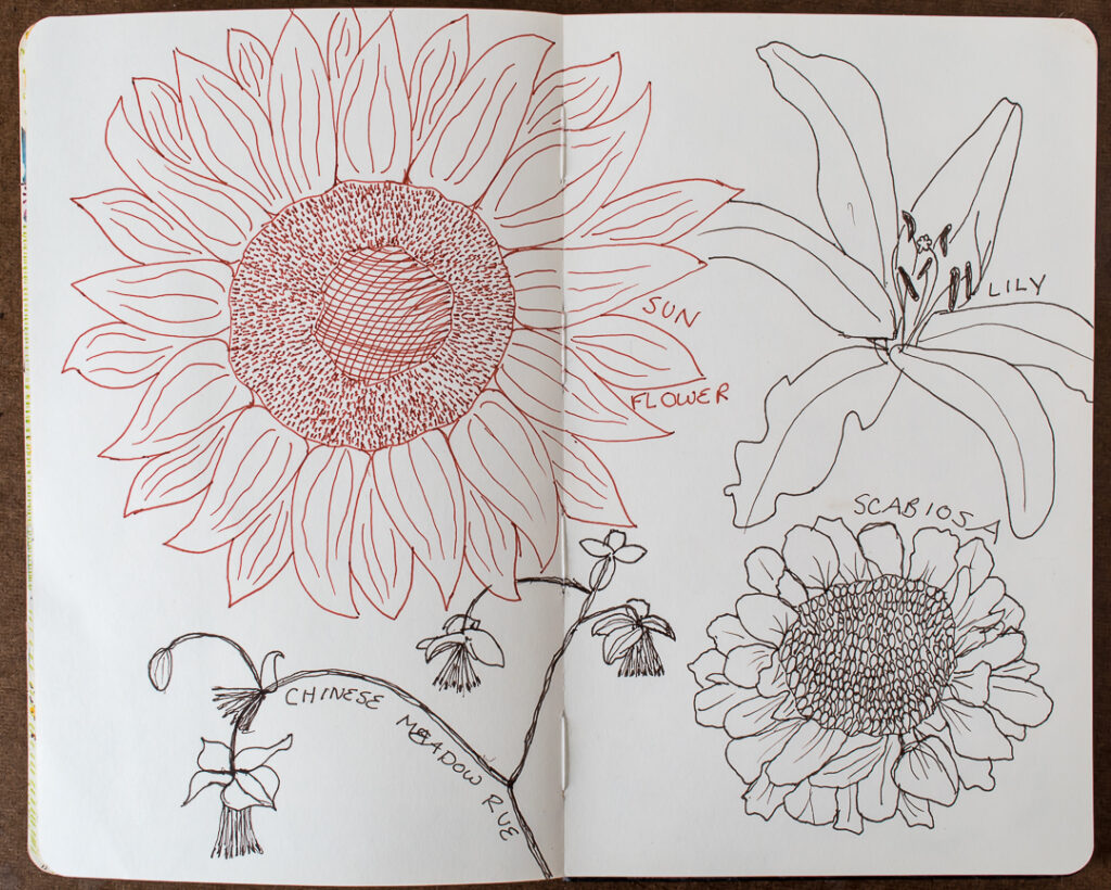 More flower sketches