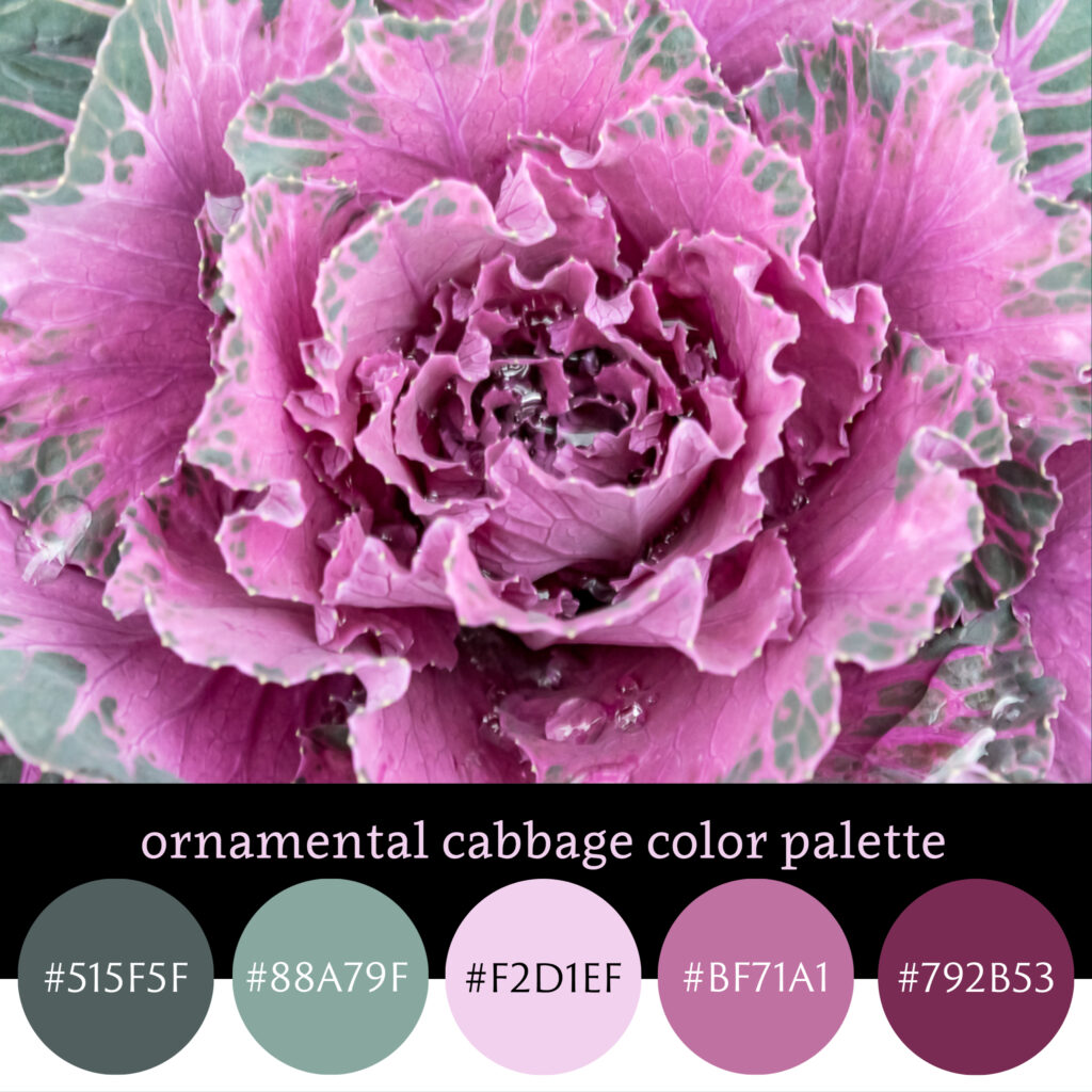 Ornamental Cabbage Color Palette