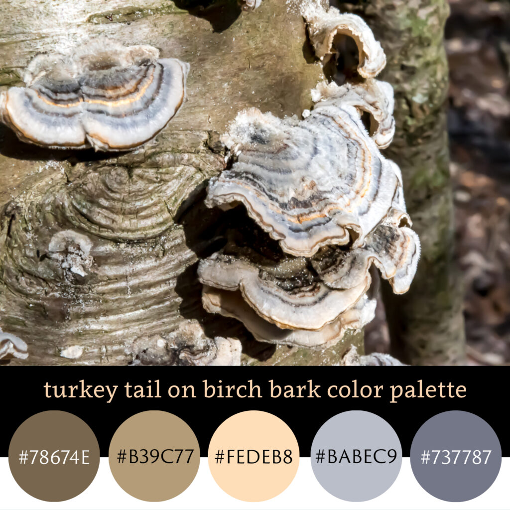 Turkey Tail on Birch Bark Color Palette