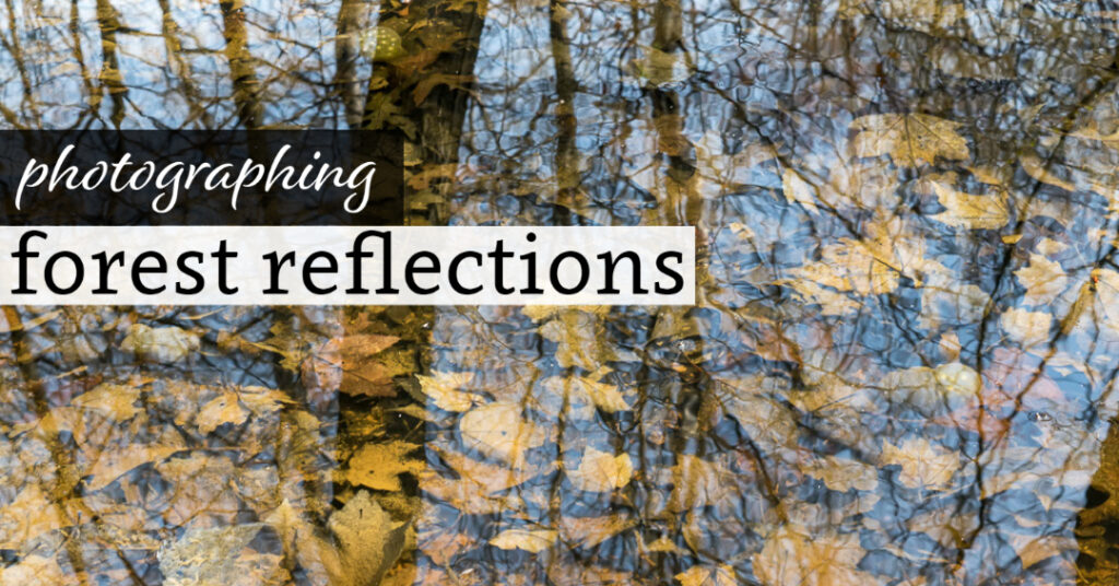 Photographing Forest Reflections