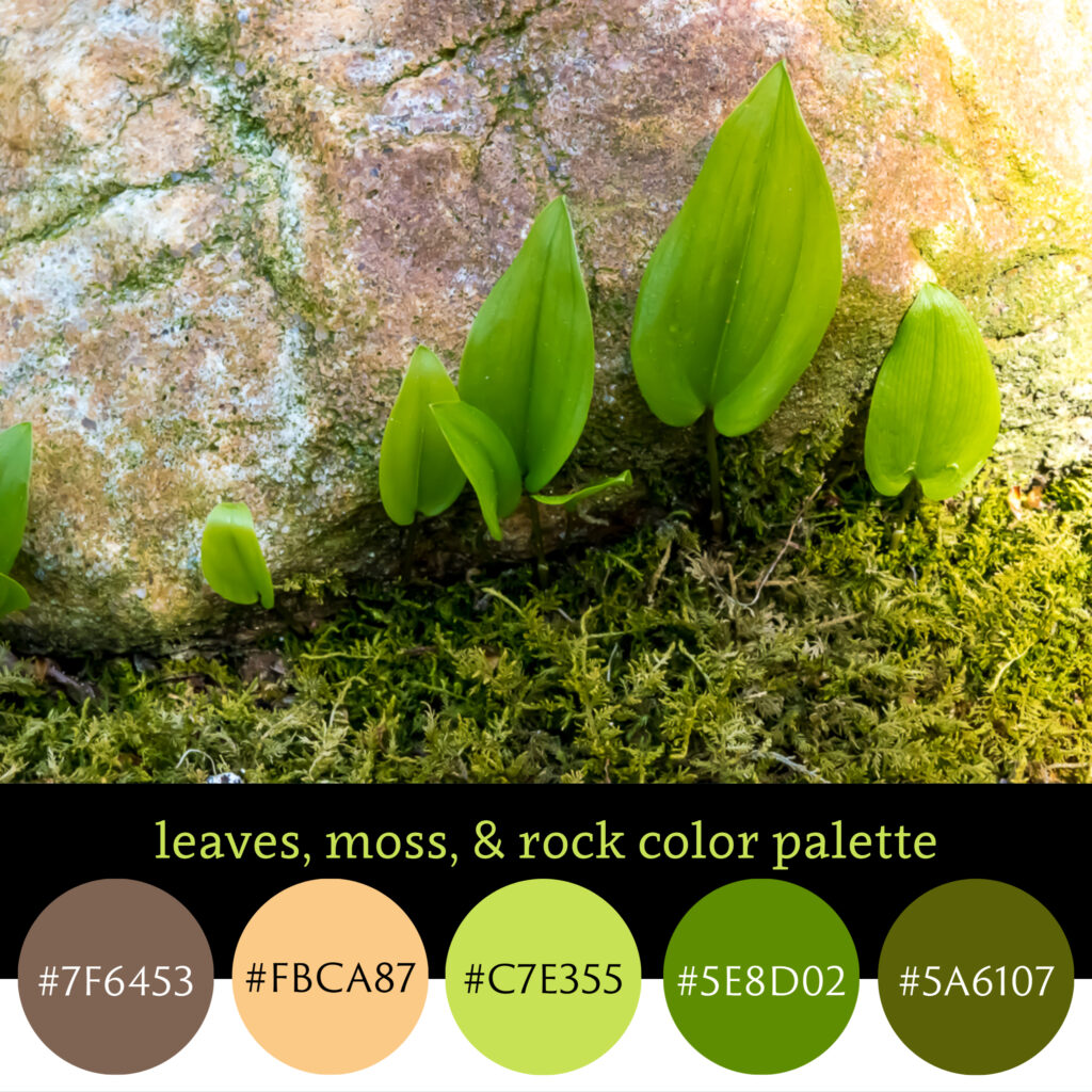 Leaves, Moss, & Rock Color Palette