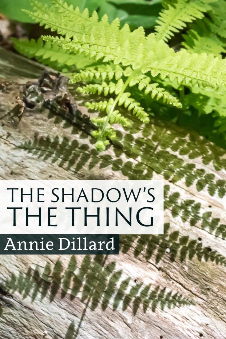 """""""The shadow's the thing."""" ~Annie Dillard"""