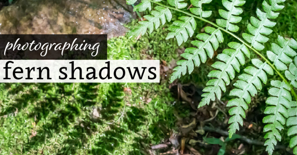 Photographing Fen Shadows