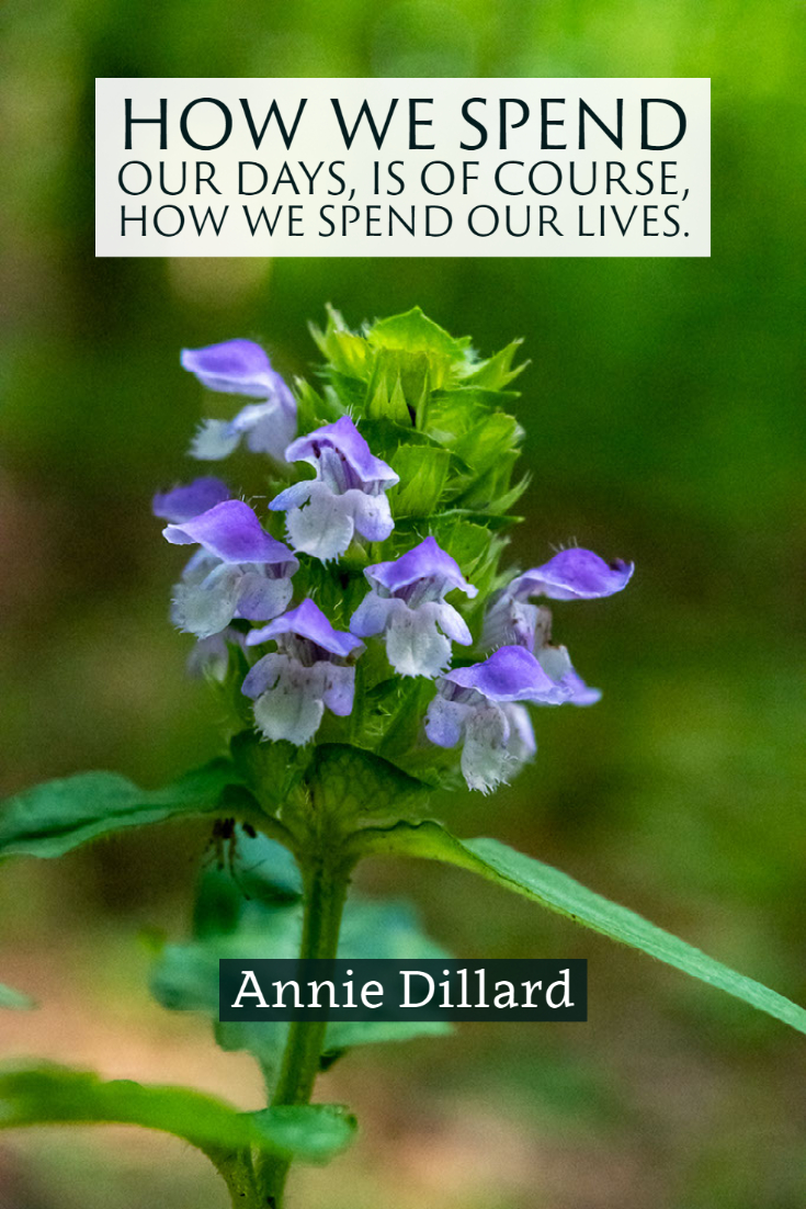 """""""How we spend our days, is of course, how we spend our lives."""" ~Annie Dillard"""