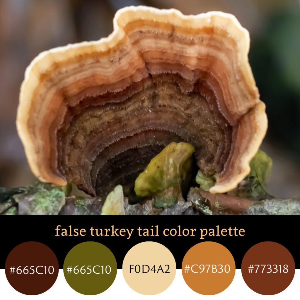 False Turkey Tail Color Palette