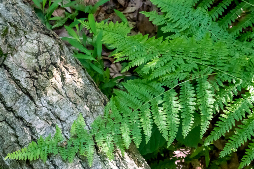 Fern leaves with log