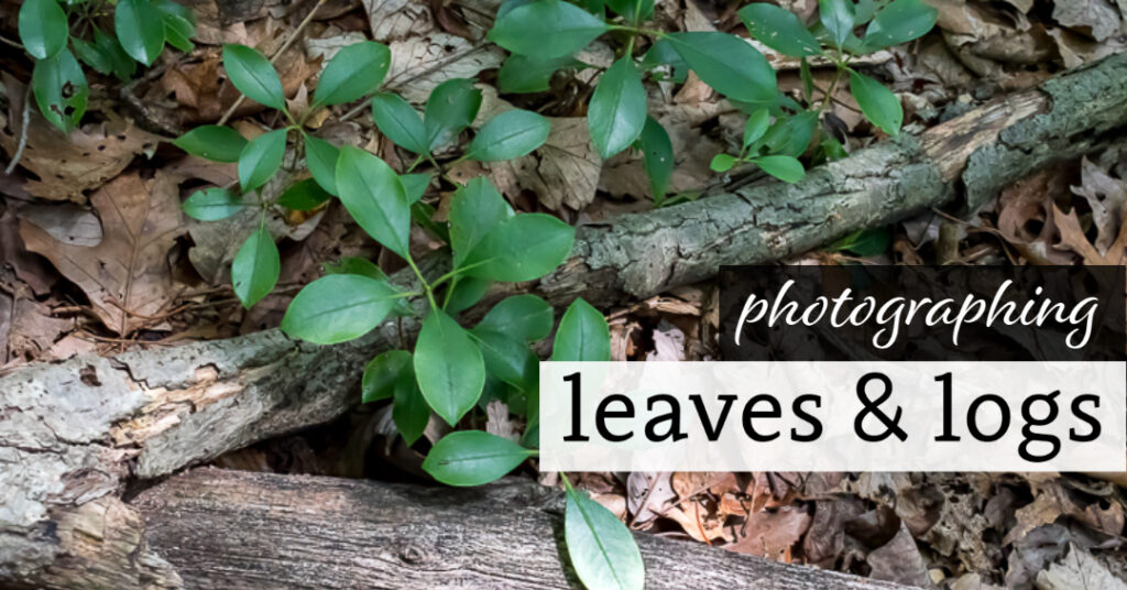 Photographing Leaves & Logs