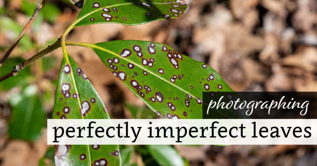 Photographing Perfectly Imperfect Leaves