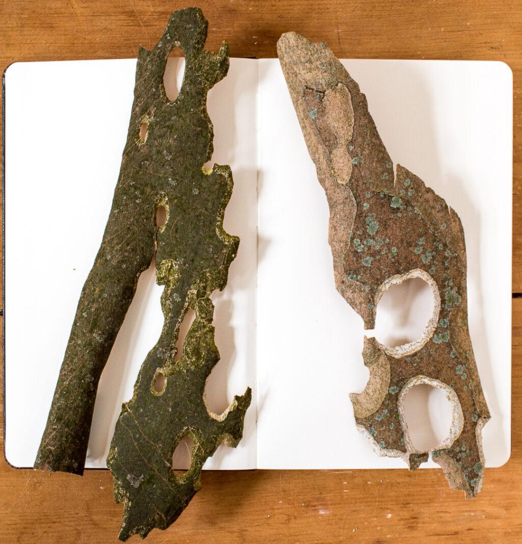 Sycamore bark shapes