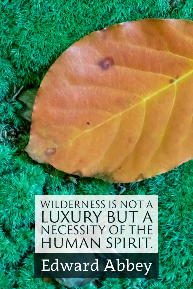"""""""Wilderness is not a luxury but a necessity of the human spirit."""" ~Edward Abbey"""