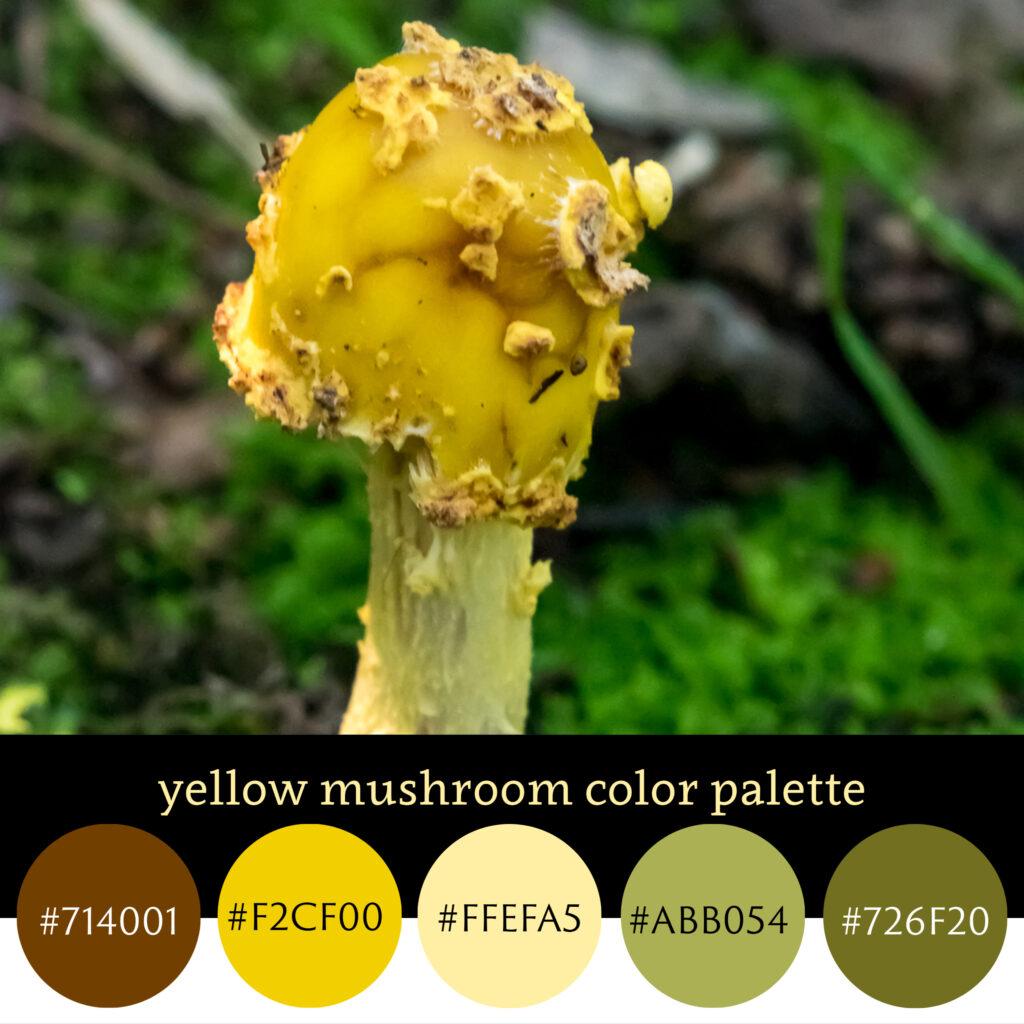 Yellow Mushroom Color Palette