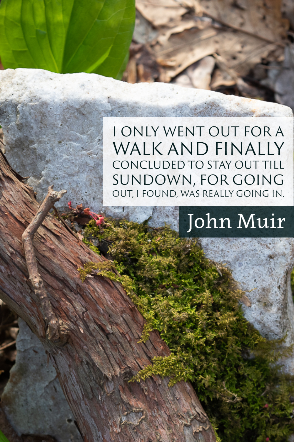 """""""I only went out for a walk and finally concluded to stay out till sundown, for going out, I found was really going in."""" ~John Muir"""