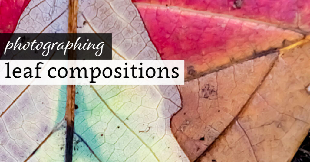 Photographing Leaf Compositions