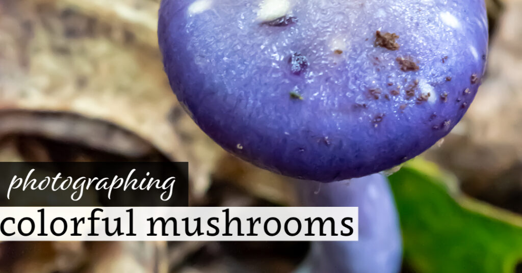 Photographing Colorful Mushrooms